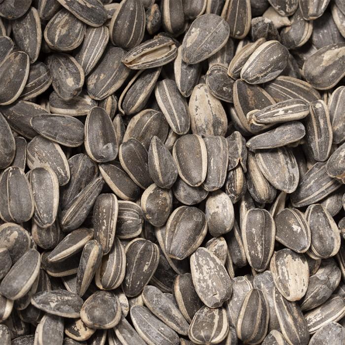 Graines de tournesol salées (avec écale)