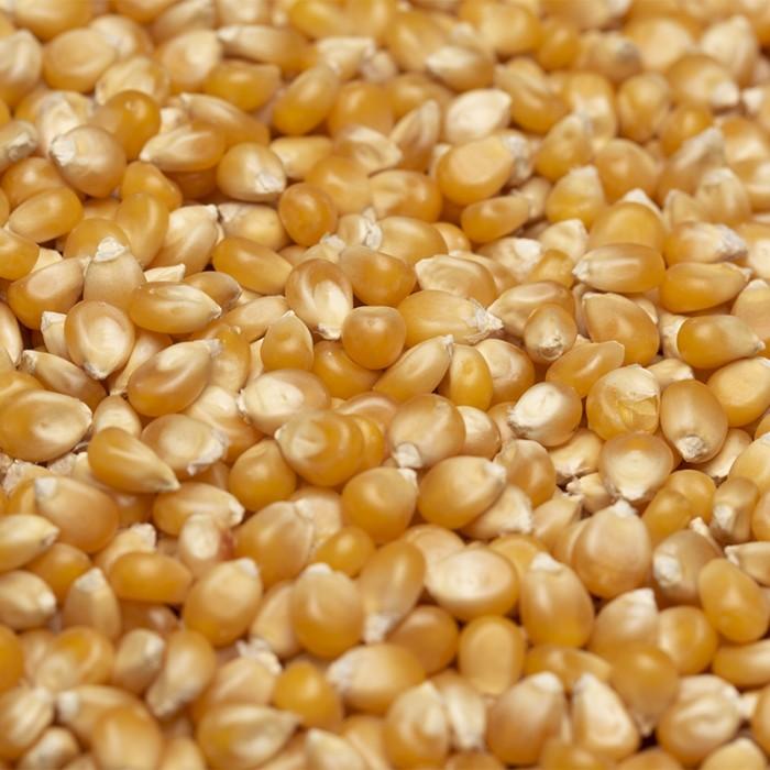 Maïs à éclater